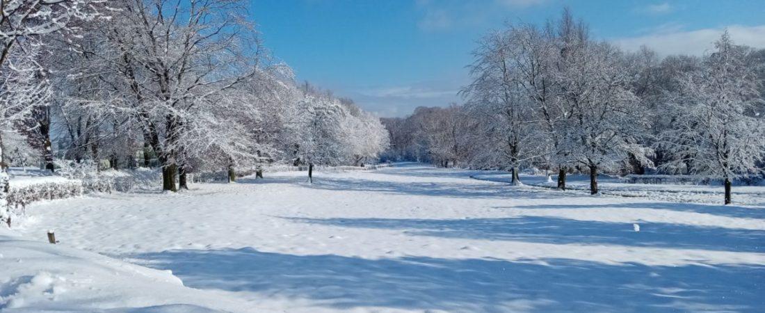 Schneebedeckte Wiese