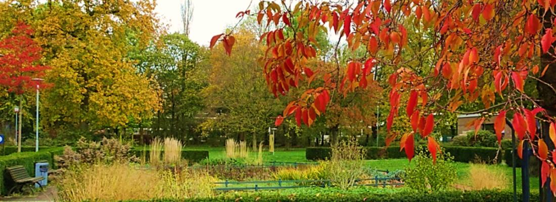 Foto Herbst