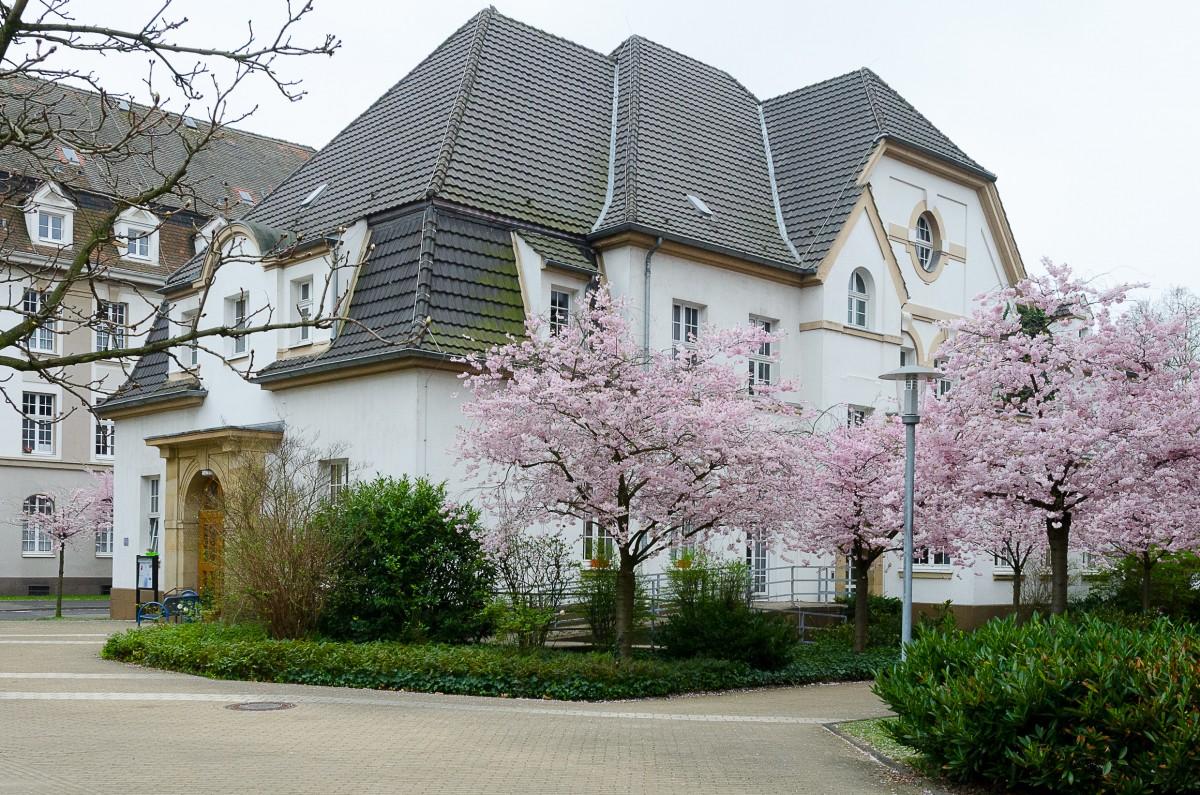 Zu sehen ist das historische Gebäude des Seniorentreffs mit rosa-blühenden Kirchblüten.