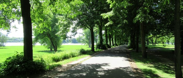 Von Bäumen gesäumter Weg am Ufer des Rheins