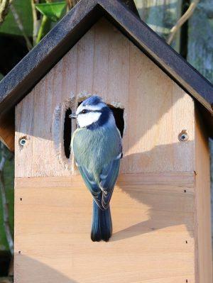 Nistkasten mit Vogel