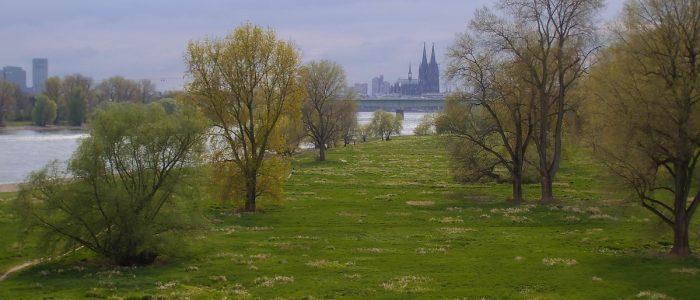 Rheinaue mi Blick zum Dom (Foto: U. Sommer)