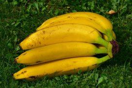 Bananenstaude,liegende (Foto: Pixabay)