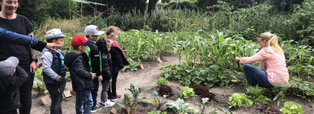 Lagebesprechung im Gemüsegarten