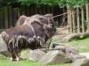 Kölner Zoo 2012